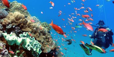 Sm 400 pulau luxury charters diving gili